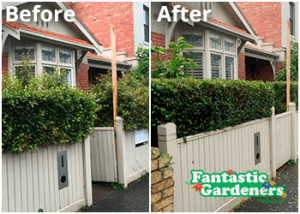 Hedge trimming Melbourne before after