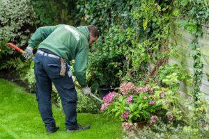 Gardening services in Hampton
