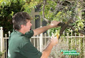 Tree Services in Melbourne