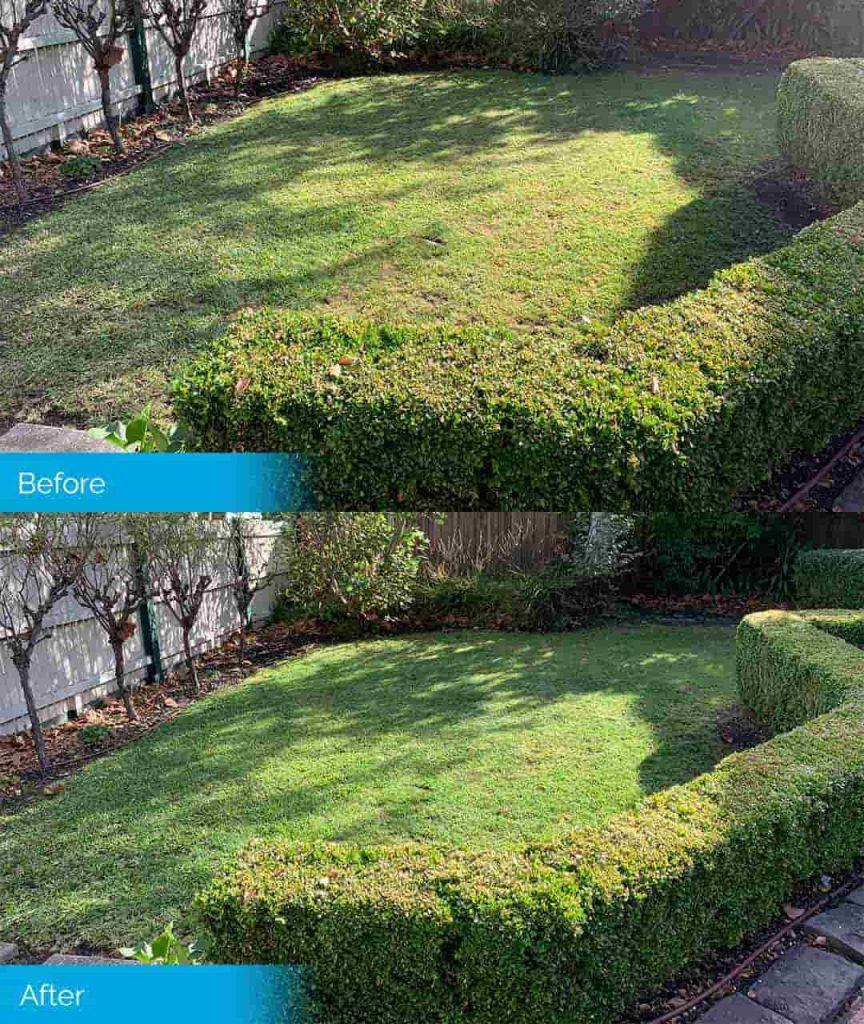 Lawn Painting Service